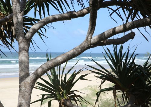 Explore Noosa's eastern beaches